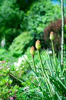 101209_3_Rolly_Englishgarden.jpg