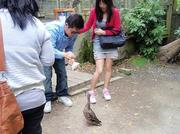 091214_Noby2_friendsduck.jpg